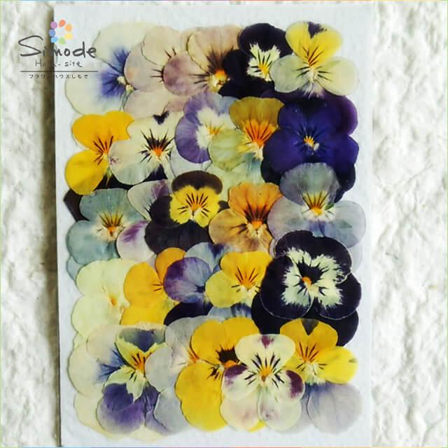 【S-614】パンジー小(ビオラ)25枚カラーミックスミニサイズ押し花素材、押し花パックを飛騨で手作りしています。国産品の安全品質です!