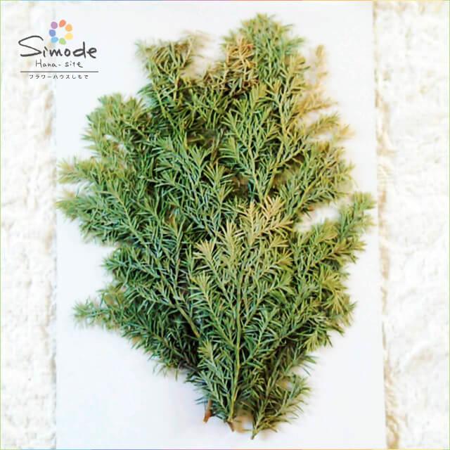 【S-624】押し花 ヒバ5本押し花額やレジンアクセサリー制作などハンドメイド素材として人気です飛騨で手作りしています。国産品の安心品質です!