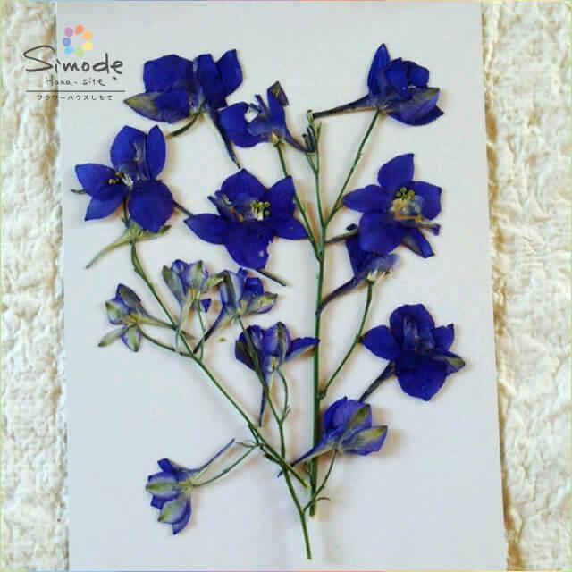 【S-625】押し花 デルフィニウム(青)3本押し花額やレジンアクセサリー制作などハンドメイド素材として人気です飛騨で手作りしています。国産品の安心品質です!