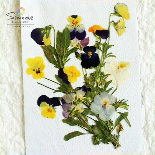 【S-637】押し花 パンジー茎付き10本レジンアクセサリー、スマホケース、ハーバリウム、キャンドルなどハンドメイド・DIY素材として人気です。飛騨のお花屋さんが手作りしています。すべて国産の安心品質です。