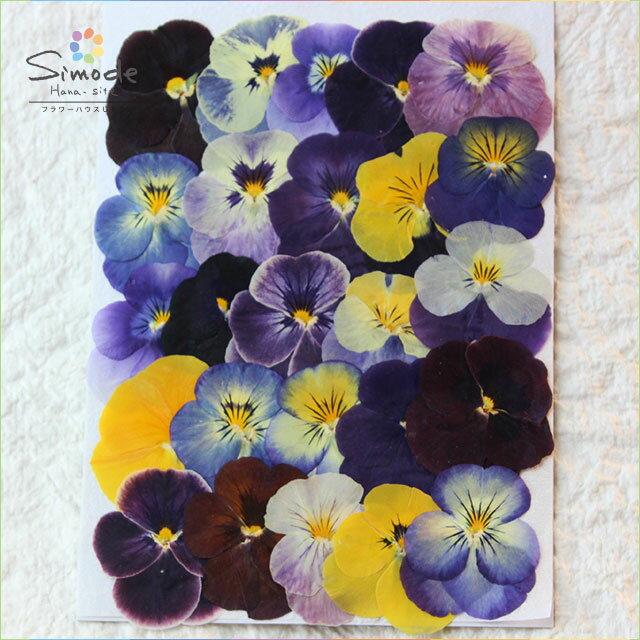 押し花 パンジーミックス25枚さまざまなカラー、サイズの押し花をミックスして詰め合わせました。飛騨のお花屋さんが手作りしています。安全安心の国産品質です