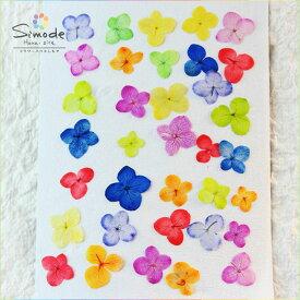 着色アジサイ35枚(あじさい・紫陽花)カラフルな押し花素材。飛騨のお花やさんの手作り素材です