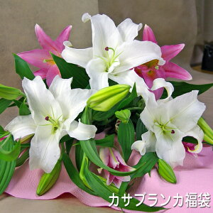 カサブランカ福袋カサブランカとピンク百合の花束【母の日】【御祝】【記念日】【誕生日】【御供】