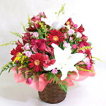 お花の画像1