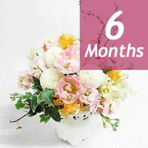 季節のアレンジ・デラックス-6ヶ月定期便-