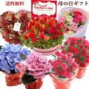 2019年 母の日 ギフト 01 カーネーション 他選べる9種類の花ギフト花鉢 カーネーション アジサイ ケイトウケーキ アー…