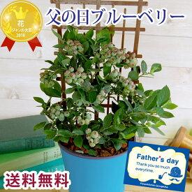 【2021父の日】父の日 ギフト 贈り物 自宅用【送料無料】 ブルーベリー鉢植え 5号 人気の育てる贈り物 ブルーベリー ベリー ガーデニング 実物 実付き 鉢植え 苗木 FKPP 2021 お祝い プレゼント