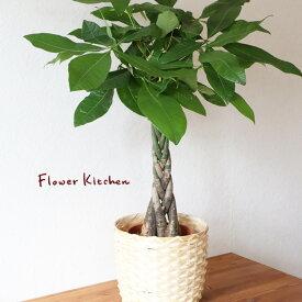 【あす楽】『 パキラ 7号 + IKEA KAFFEBONA カゴ付 』受け皿付カフェボーナ 大型 パキラ 7号 鉢カバーセット 送料無料 イケア ギフト 育てやすい 観葉植物 誕生日 お祝い インテリア FKTK