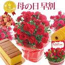 \早割/母の日 プレゼント 花 ギフト 選べる9種類 選べる花鉢&リースとスイーツセット 母の日ギフトカーネーション …