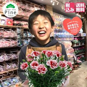 母の日 カーネーション [珍しい 新 品種 3タイプ] さくらもなか ももみるく 鉢 鉢植え 送料無料 5号 5号鉢 母の日ギフト プレゼント 宅配 花 ギフト セット 希少 鉢植 おしゃれ かわいい 生花