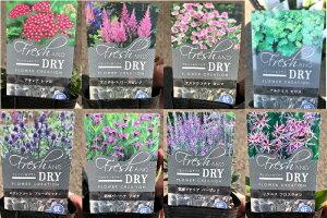 フレッシュ&ドライシリーズ 各種苗 3号ポット お庭でガーデニングとして楽しんだ後、ドライフラワーとして楽しめる草花たちを集めました♪アキレア アスチルベ アストランチャ