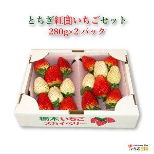 <いちご王国とちぎ 紅白苺セット 280g×2パック>栃木県産品 佐野市