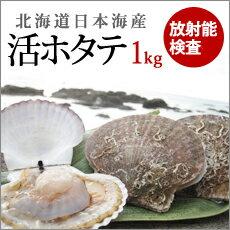 ホタテ 殻付き 日本海の活ホタテ 1kg 北海道寿都産 産地直送 送料無料 放射能検査済み