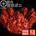 ≪特大サイズ≫花咲蟹 花咲ガニ(姿) 1.2-1.3kg前後 最高品質 冷凍市場に出回らない大きさで食べ応え抜群!味の濃厚さ…