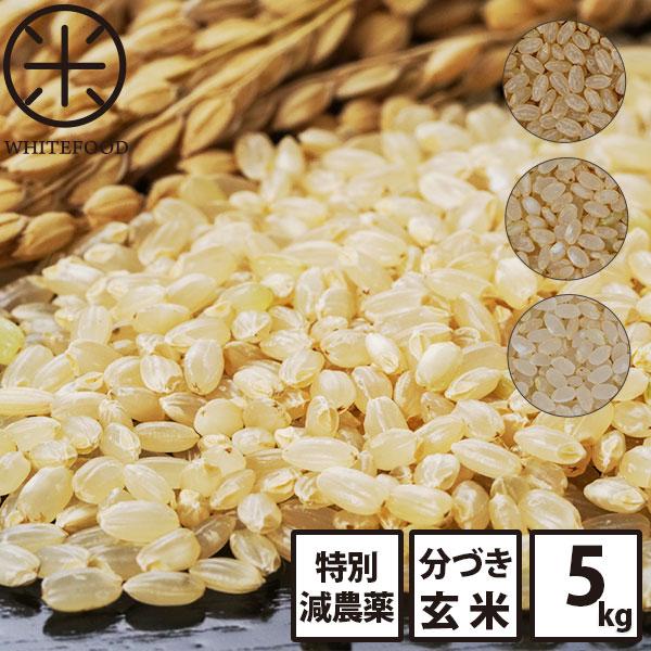 分づき 玄米 新米 5kg 送料無料 北海道産ホワイトライス 減農薬米CL 残留農薬検査済み 放射能検査済み 定期購入
