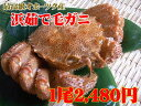 【10尾以上で送料無料!】北海道産毛ガニ(約400〜420g)