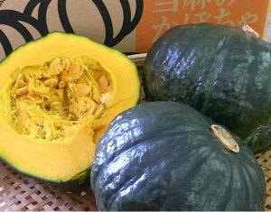 【幻の逸品】北海道当麻産かぼちゃ「黒王」(約2〜2.5kg、1〜2玉)※9月中旬〜下旬頃発送スタ−ト