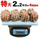 毛ガニ 特大 570g前後×4尾 合計2.2kg前後 [一級堅品けがに][カニ味噌(蟹のかにみそ)入][ボイル加熱済み][訳あり 訳有 わけあり]