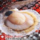 【送料無料】大サイズ北海道産貝付き活ホタテ約3kg分(15枚前後〜17枚前後)[活ほたて/殻付き/生きほたて](冷蔵)