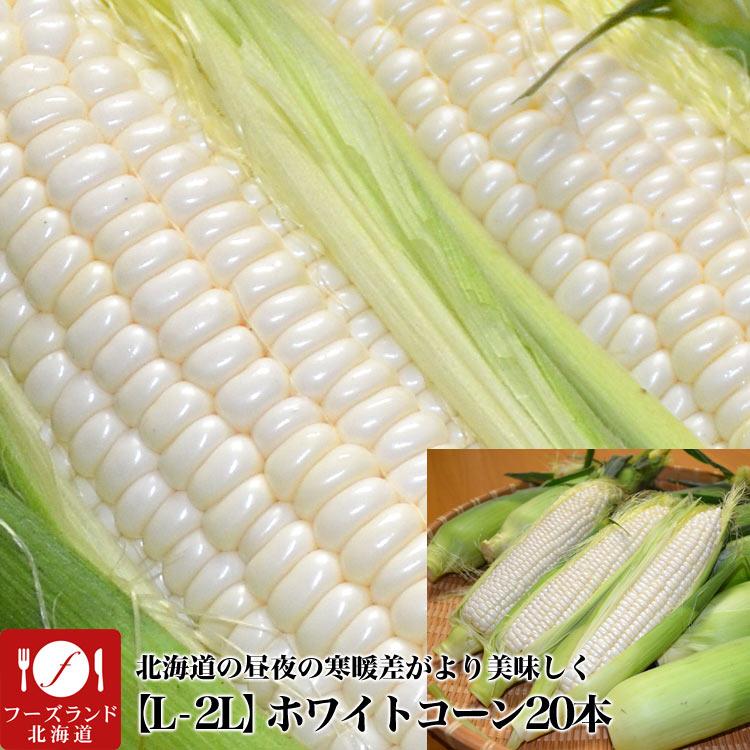 【超早割】【送料無料】北海道産ホワイトコーン(大きなL-2L)20本(8月下旬前後頃より順次発送)[白とうもろこし/トウモロコシ][とうきび][スイートコーン](冷蔵)