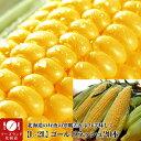 【送料無料】北海道産ゴールドラッシュ(大きなL-2L)20本黄とうもろこし(8月下旬前後頃より順次発送)[とうきび][スイー…