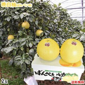 晩白柚 みかん ばんぺいゆ 送料無料 特選 約3kg〜4kg 2玉入 M〜2Lサイズ 世界最大級の柑橘 熊本県八代産 蜜柑 ミカン