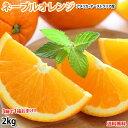 ネーブルオレンジ みかん 送料無料 2kg 3箱購入で1箱おまけ アメリカ オーストラリア産 オレンジ