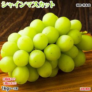 シャインマスカット ぶどう 送料無料 1kg 2〜3房 3箱購入で1箱おまけ 福岡・熊本県産 お取り寄せ マスカット 葡萄 ブドウ