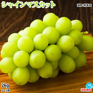 シャインマスカット ぶどう 送料無料 2kg 3〜5房 福岡・熊本県産 お取り寄せ マスカット 葡萄 ブドウ フルーツ