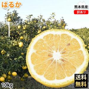 はるか みかん 10kg 送料無料 訳あり S〜2L 熊本県産 はるかみかん フルーツ お取り寄せ ミカン 蜜柑