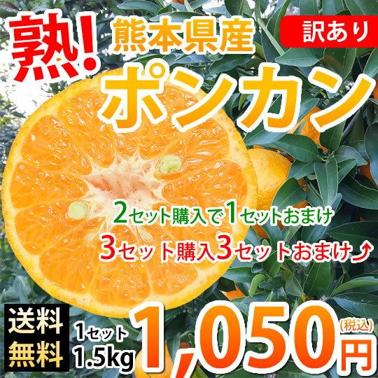 ポンカン 訳あり 送料無料 1.5kg S〜2L 熊本県産 2セットで1セットおまけ 3セットで3セットおまけ デコポン ぽんかん みかん ミカン 蜜柑