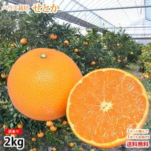 せとか みかん 訳あり 送料無料 2kg 3箱購入で1箱おまけ ハウス栽培 希少品種 熊本県産 せとかみかん 蜜柑 オレンジ 清見 アンコール マーコット
