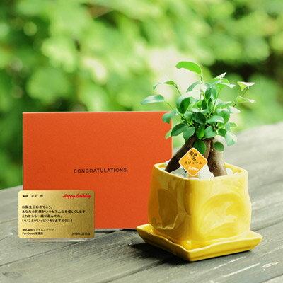 送料無料 電報 結婚式 誕生日 お祝い電報 祝電 観葉植物 人気 フォーマル かわいい 新築祝い 記念日 昇進祝い 開店祝い 【ガジュマルイエロー メッセージ】