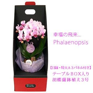 【目録・特大A3パネル付き】テーブルBOX入り胡蝶蘭鉢植え3号