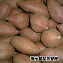 【29年種子島産 小玉 】しっとり甘〜い天然スイ〜ツ安納芋 5kg Sサイズ(60〜120g)