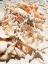 天然素材 A品 コブヒトデ 白いサンゴ 色々な貝殻セット ハワイインテリア ブライダル 手作り素材 クラフト 工作材…