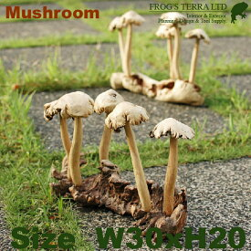 マッシュルーム・Mush5(W30cm×H20cm)(木製)(オブジェ/オーナメント)(キノコ/ウッド/Mushroom)
