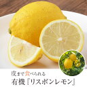 レモン 国産 レモン リスボンレモン 3kg【A品】オーガニック 有機レモン 産地直送 有機栽培 農薬不使用 無農薬 佐藤農場