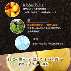 レモンリスボンレモンオーガニック有機レモン産地直送送料無料3kg有機栽培農薬不使用