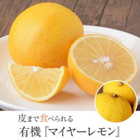 レモン 国産 レモン マイヤーレモン 3kg【A品】オーガニック 有機レモン 産地直送 有機栽培 農薬不使用 無農薬 佐藤農場