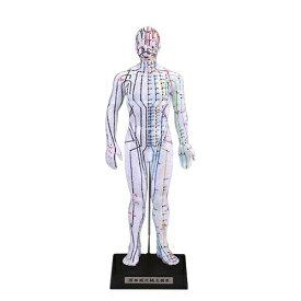 【人体模型】けいけつくんII (WHO標準経穴部位) 要穴一覧&オリジナル横並び表付き - 経絡経穴鍼灸模型