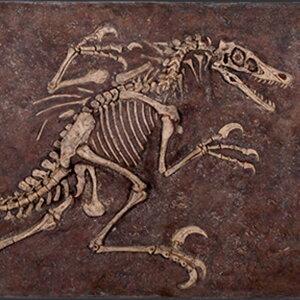 FRPヴェロキラプトルの化石