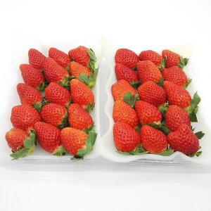 幸せイチゴ大粒形いろいろ!(品種:かおり野)280g×2パック
