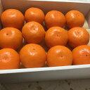 長崎県西海産 越冬味っ子みかん ハウス栽培 24玉入り【味っ子】【味まる】【長崎 みかん】
