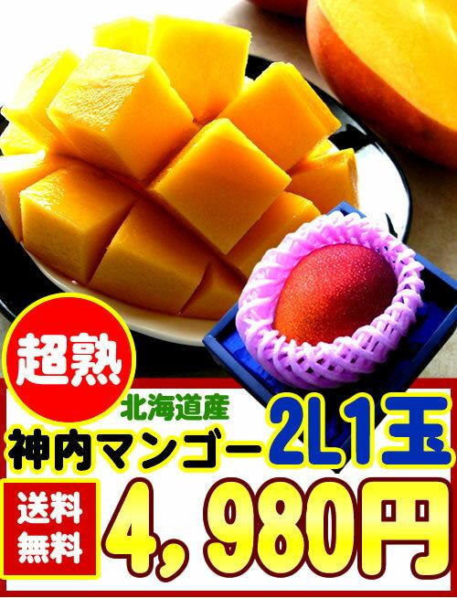 【送料無料】【糖度14度以上】北海道産[神内マンゴー2L1玉]