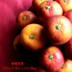 【2月下旬ころからの発送】ブラッドオレンジ タロッコ種 モロ種 愛媛県産[ブラッドオレンジ2.5kg]全国送料無料 2月下旬ころからの発送