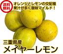 三重県産(国産メイヤーレモン 3kg)送料無料 マイヤーレモン 防腐剤・ワックス不使用レモン  防ばい剤不使用レモ…