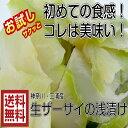 【送料無料】青木さんの三浦 ザーサイ浅漬け200g×2パック 浅漬け 国産 ザーサイ 国産ザーサイ 産直