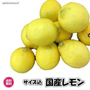 国産レモン(愛媛県レモン 1kg)皮ごと使える ノーワックス サイズ込 国産 レモン  送料無料