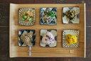 和食器 古染付 土物 正角皿 水玉 美濃焼 ミニプレート 人気小皿【新商品SALE/fucca限定価格 小皿 人気食器 】